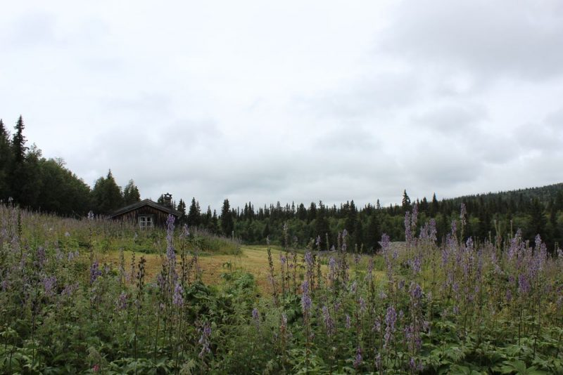 Lyssna på skogens berättelser